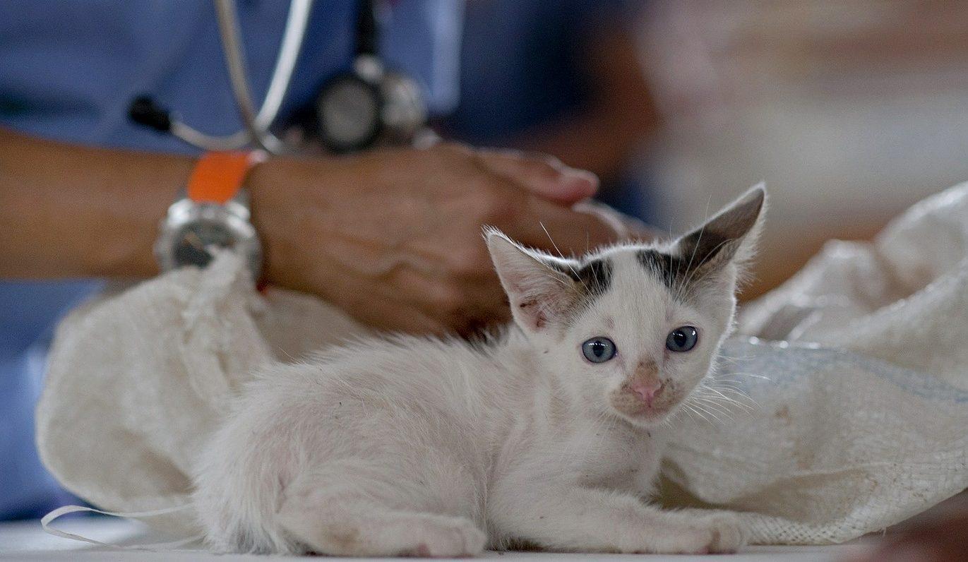 kitten-569873_1920